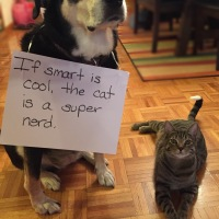 Howlidays: Smart Is Cool Day