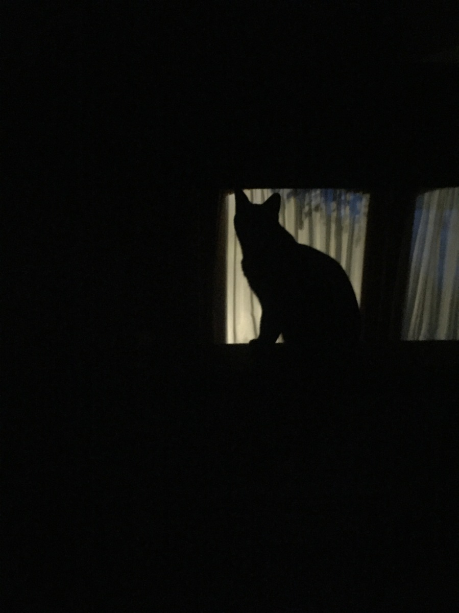 Midnight Mutts: Silhouette