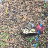 Weekend Wildlife: Squirrel Feeder