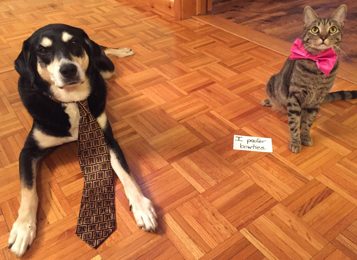 Howlidays: International Necktie Day