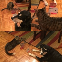 Howlidays: Card Playing Day