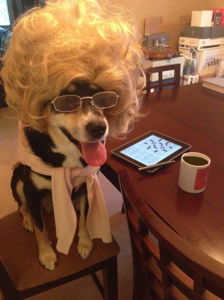 Coffee Talk with Choppy the Dog