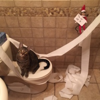 Elf on the Shelf: Blame the Cat
