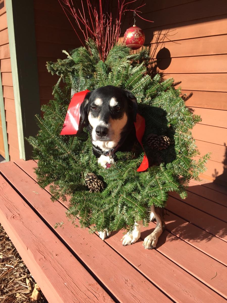 Howlidays: Wreaths Across America Day
