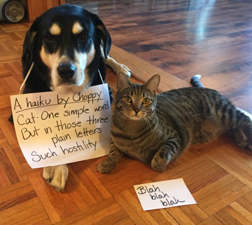 Haiku Dog and Cat.jpg