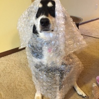Howlidays: Bubble Wrap Appreciation Day