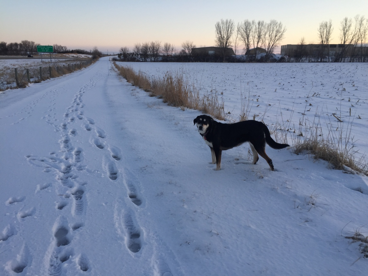 Dog Walk Challenge: Days 715 to 721