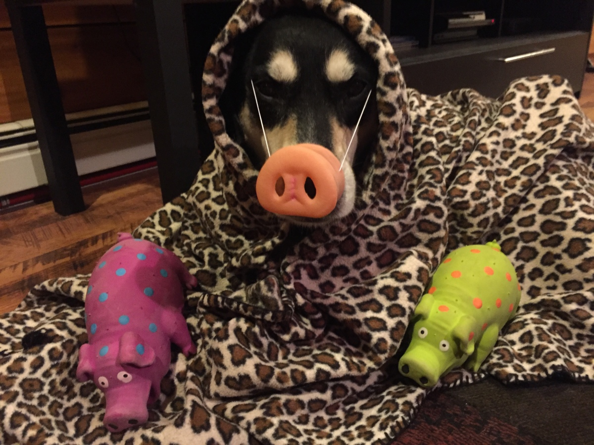 Howlidays: Pig in a Blanket Day