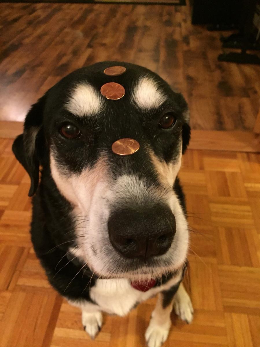 Howlidays: Lucky Penny Day