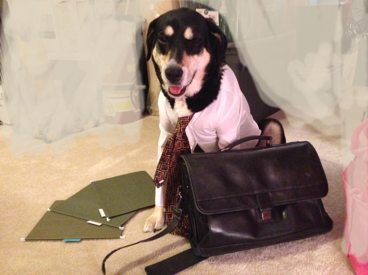 Howlidays: Take Your Dog to Work Day
