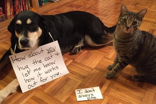 Choppy and Schooner - Hug Your Cat Day