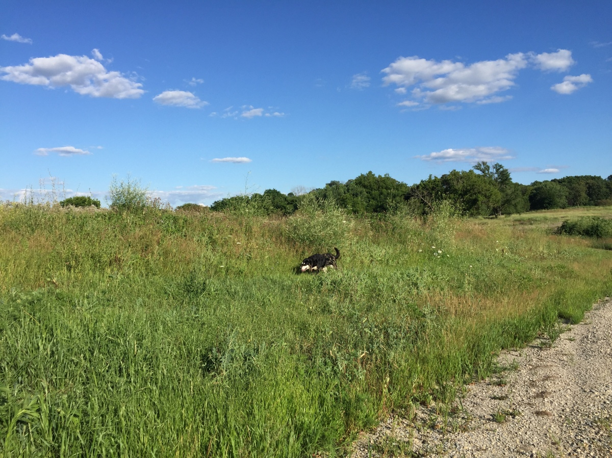 Dog Walk Challenge: Days 801 to 808