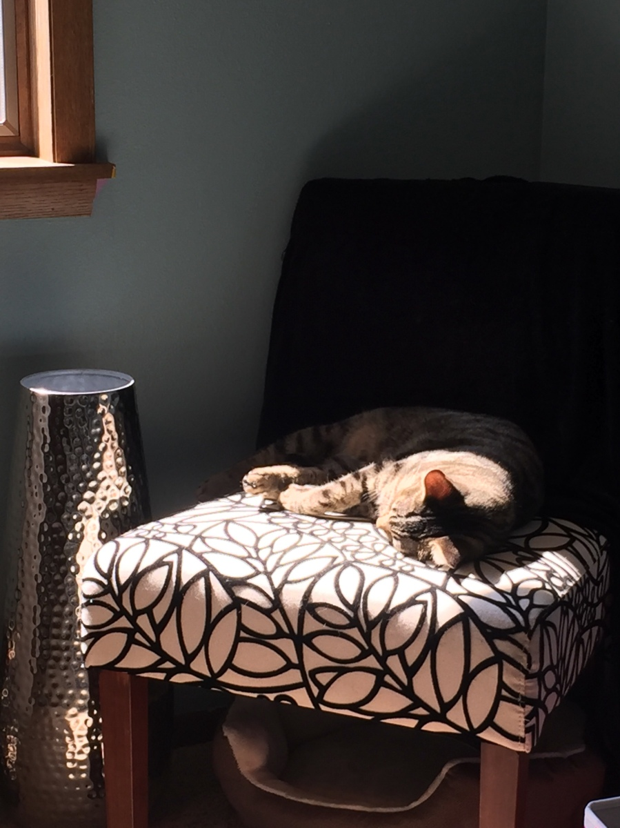 Midnight Mutts: A Nap in the Sun