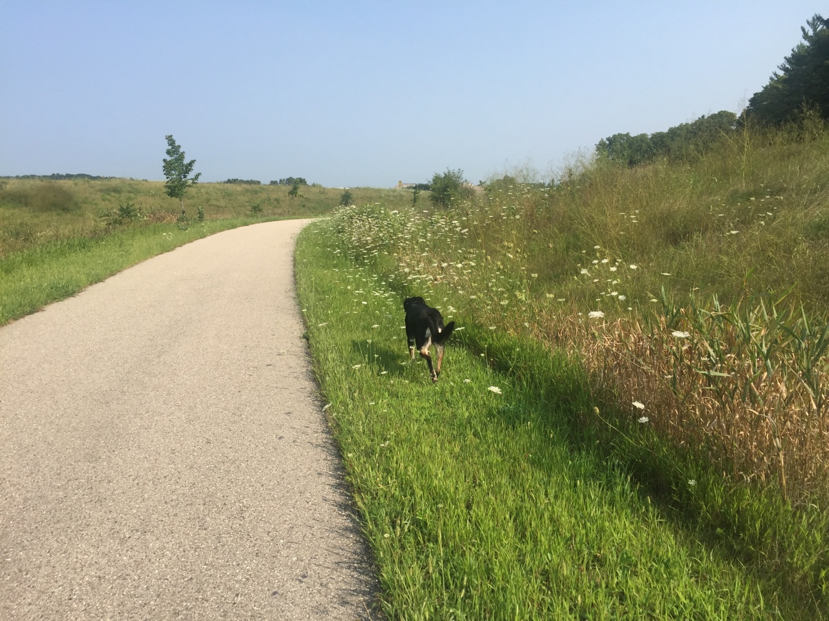 Dog Walk Challenge: Days 829 to 835