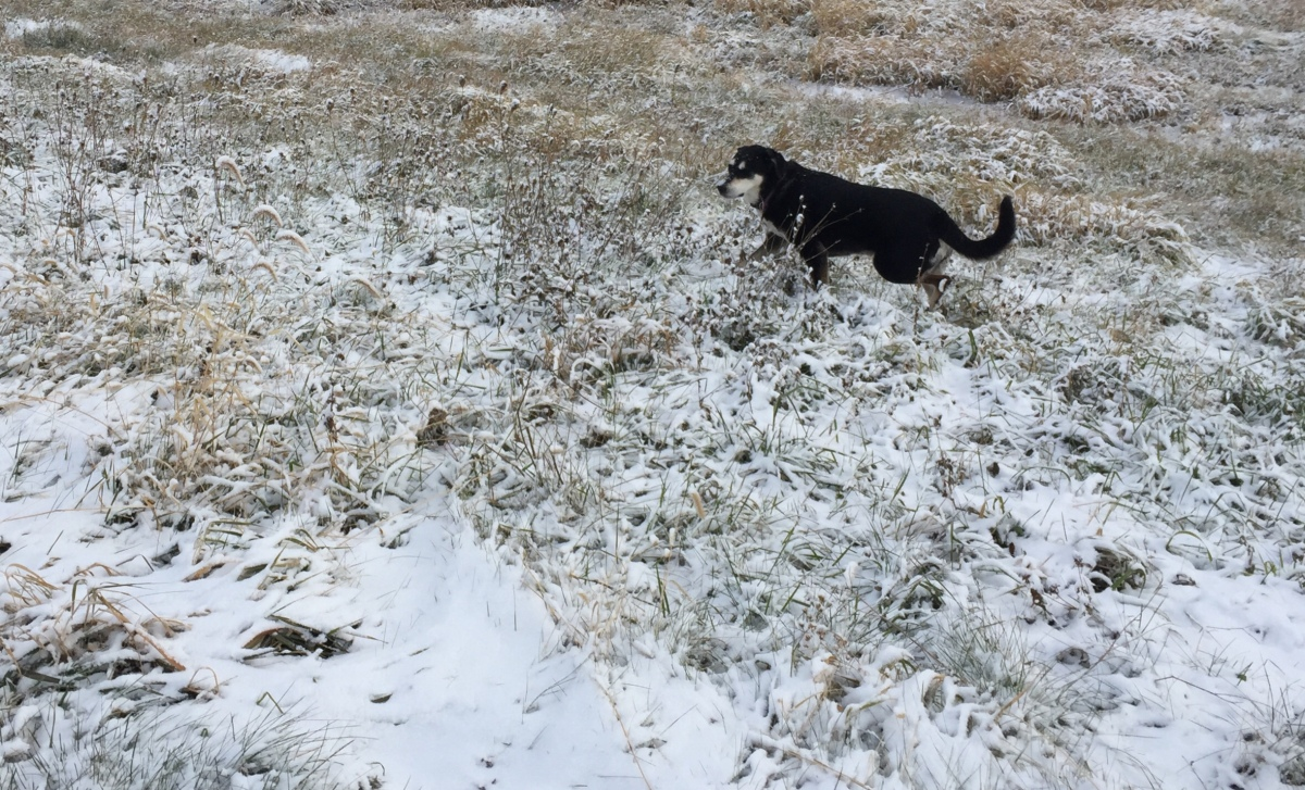 Midnight Mutts: New Snow