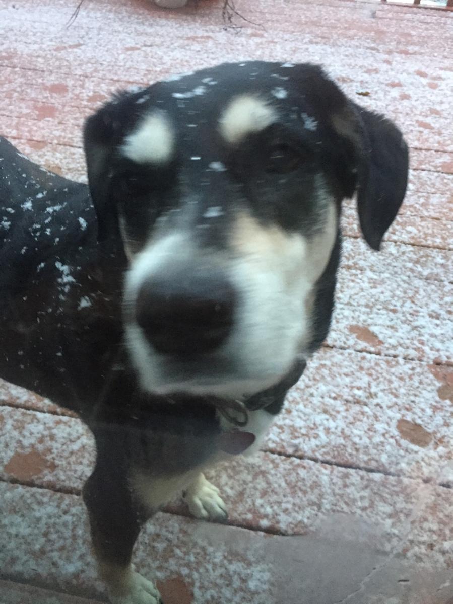 Midnight Mutts: Snow Dog
