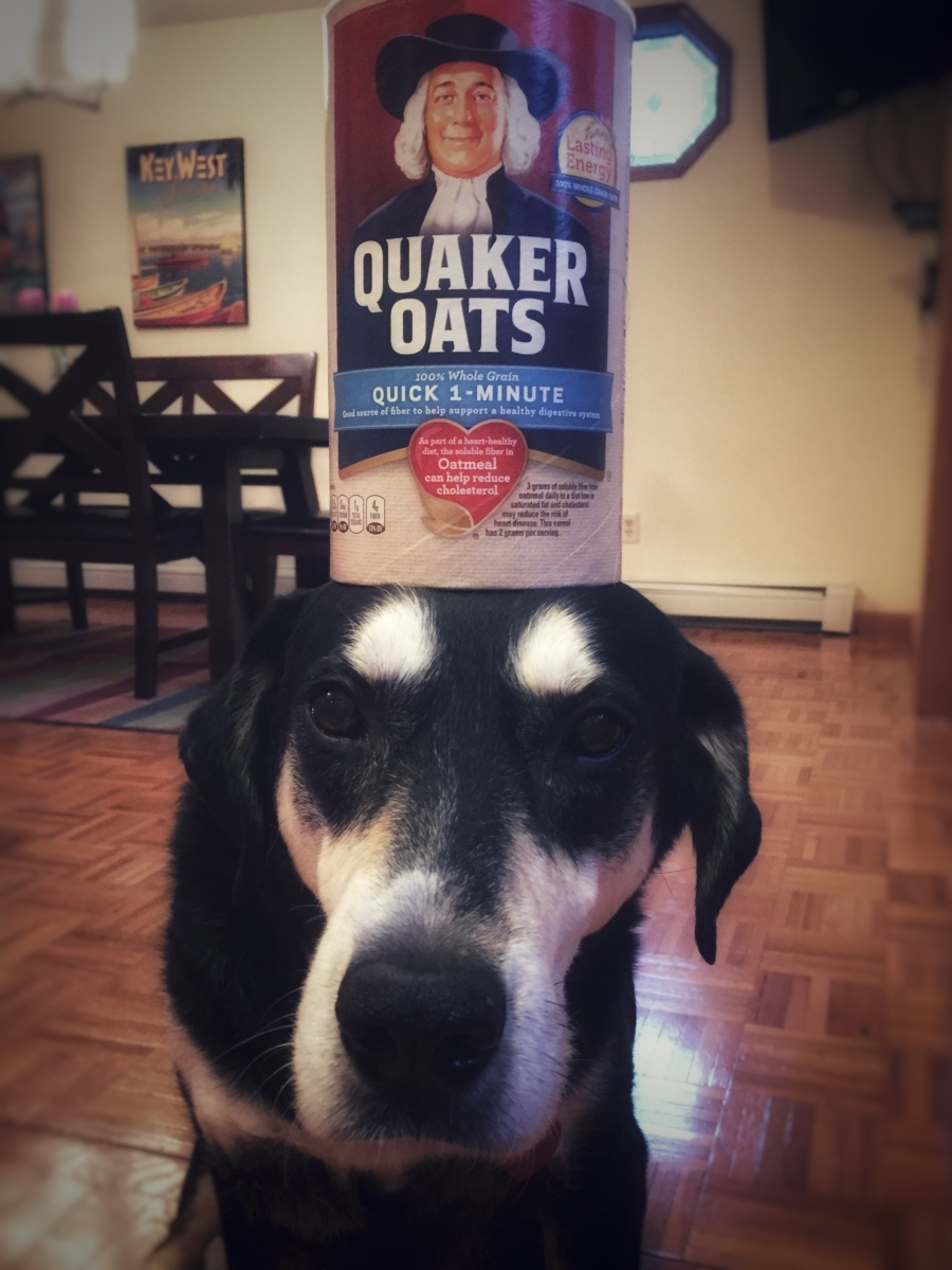 Howlidays: Oatmeal Month