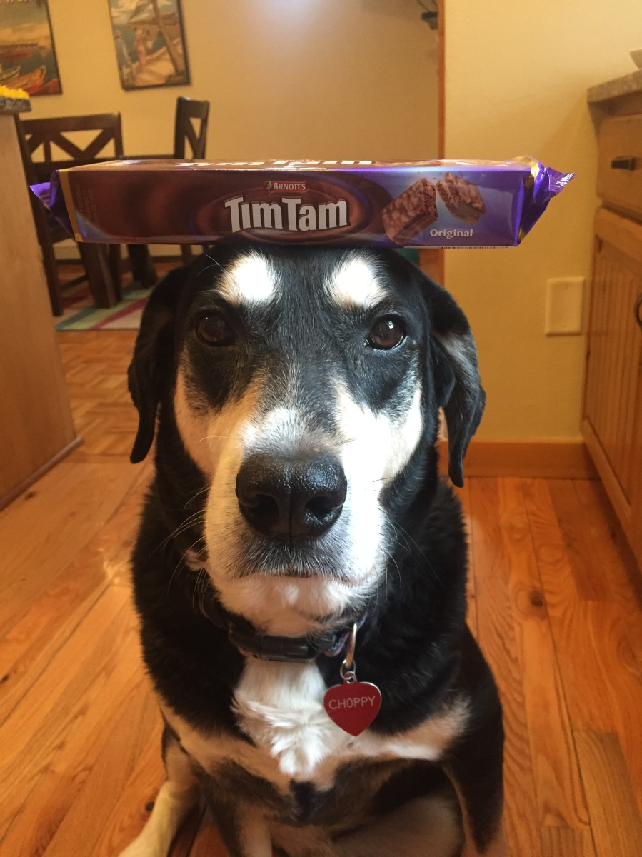 Howlidays: Tim Tam Day
