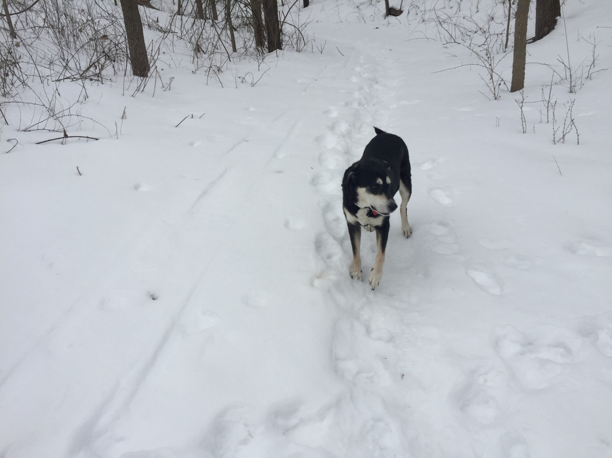 Midnight Mutts: Impatient in the Snow