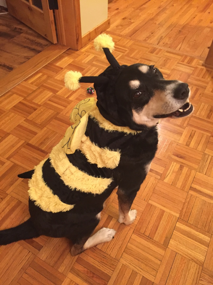 Howlidays: World Bee Day
