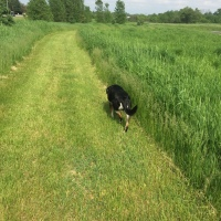 Midnight Mutts: Summer Grass