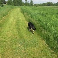 Midnight Mutts: Summer Grass