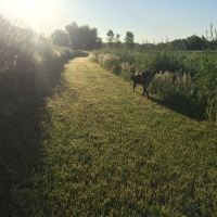 Dog Walk Challenge: Days 1,137 to 1,143