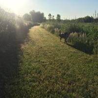 Dog Walk Challenge: Days 1,137 to 1,143