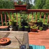 Midnight Mutts: Sunny Deck Dog