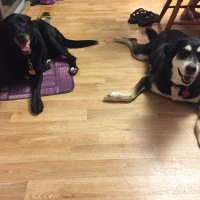 Midnight Mutts: Besties Together Again