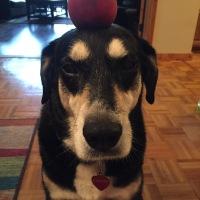 Howlidays: Peach Month