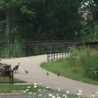 Weekend Wildlife: Bike Trail Turkeys