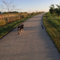 Dog Walk Challenge: Days 1,200 to 1,206