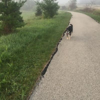 Midnight Mutts: Foggy Morning
