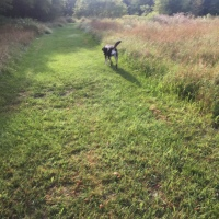 Dog Walk Challenge: Days 1,228 to 1,234