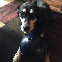 Howlidays: Learn to Bowl Month