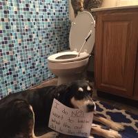 Howlidays: World Toilet Day