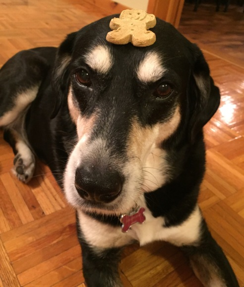 Cookie Exchange Dog