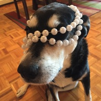 Howlidays: National Wear Your Pearls Day