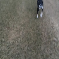 Midnight Mutts: Choppy the Blur