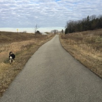Dog Walk Challenge: Days 1,314 to 1,320