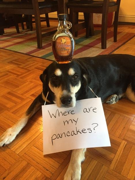 Maple Syrup Dog