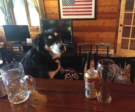 Pets at Bar