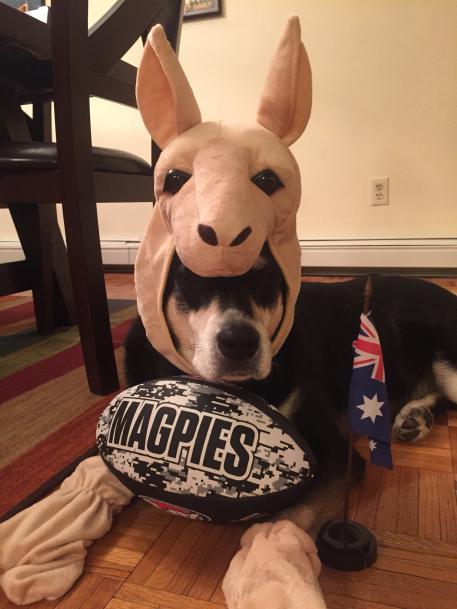 Australia Dog