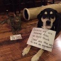 Howlidays: Answer Your Cat's Questions Day