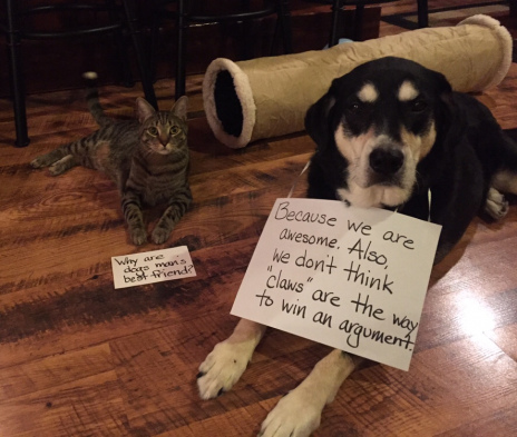 Dog Answers Cats Question