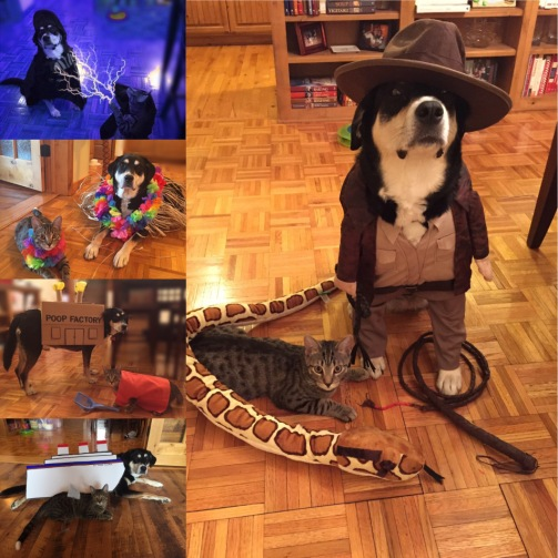 Dress Up Pet Montage