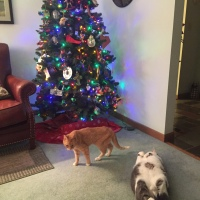 Midnight Mutts: Christmas Cats