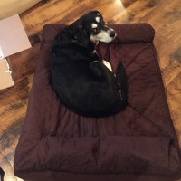 Midnight Mutts: Whose Bed Is It?