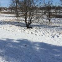 Dog Walk Challenge: Days 1,349 to 1,355